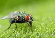 wet-fly-1